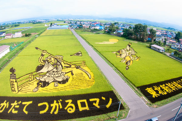 Japanese rice field pictures