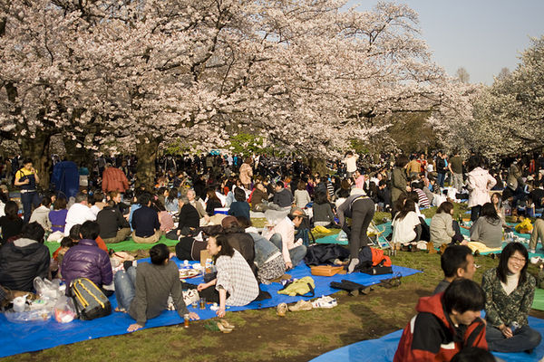 hanami party time